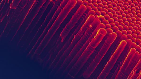 Hófehérke álma - tényleg rákkeltő a titánium-dioxid?